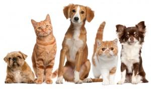 Vaistai gyvūnams